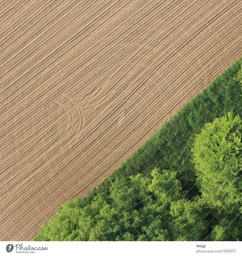grafisch | mit Schwung... Natur grün Pflanze Baum Einsamkeit Landschaft ruhig Wald Umwelt Gras Frühling natürlich außergewöhnlich Linie braun Feld