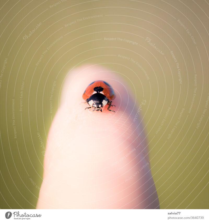 Glücksbringer Marienkäfer Käfer Tier Natur Tierporträt Schwache Tiefenschärfe krabbeln Finger Insekt Nahaufnahme klein Makroaufnahme Sommer Textfreiraum oben
