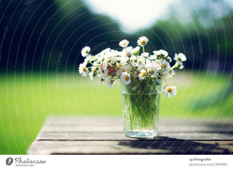 Gänseblümchen Garten Tisch Pflanze Sonne Sommer Blume Blüte Wärme Glas Holztisch Farbfoto Außenaufnahme Menschenleer Textfreiraum links Tag