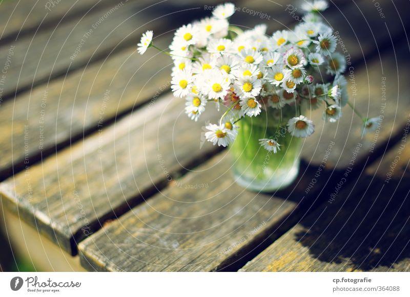 Gänseblümchen II Sommer Pflanze Blume Wärme Garten Glas Schönes Wetter Holztisch