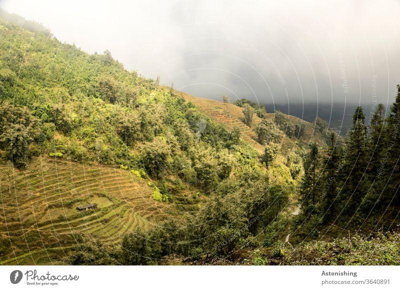 Landschaft im Nebel von SaPa, Vietnam Wetter exotisch Stufen Außenaufnahme sa pa Sapa Asien Natur Ferien & Urlaub & Reisen Pflanzen Aussicht Landwirtschaft