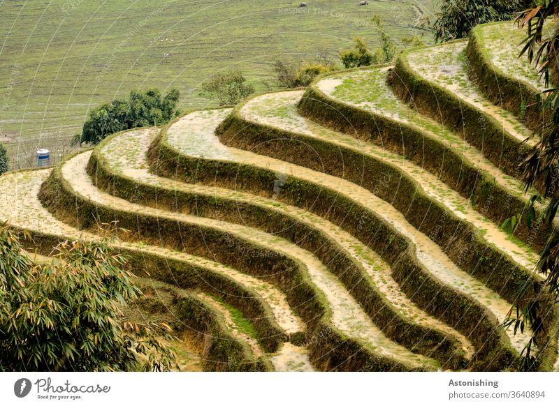 Reisterrassen in SaPa, Vietnam Terrasse Sapa terrassiert Landwirtschaft grün Natur Landschaft Feld Reisfeld Farbfoto Asien Außenaufnahme Lebensmittel Pflanze