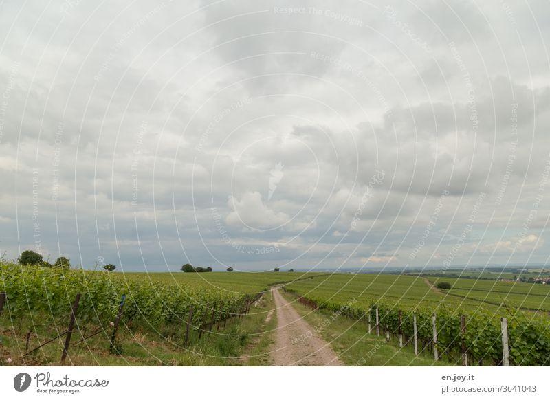 Weg zwischen Weinreben bis zum Horizont bei bewölktem Himmel Wolken Sommer Weitwinkel grün Weinbau Reben Weite Landwirtschaft ökologisch Idylle Weinberg