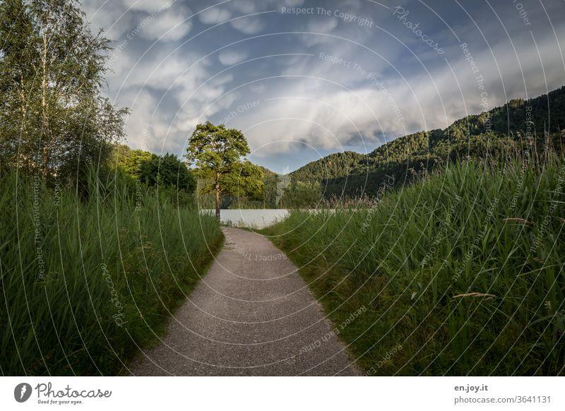 Weg zum See Pfad Gras Gräser grün Berge Baum Birken Sträucher Himmel Gewitterwolken Wolken Licht Schatten spazierweg Sommer Idylle Urlaub Reise Natur Landschaft