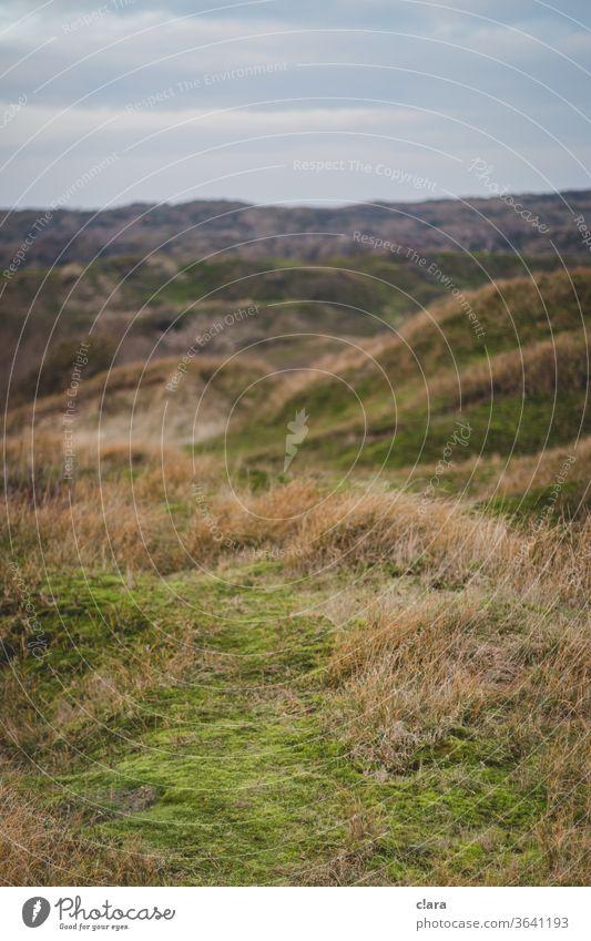 Dünenlandschaft Urlaub Landschaft schroff Natur Ferien & Urlaub & Reisen Küste Dünengras Nordsee Insel Nordseeküste Heimaturlaub Baltrum