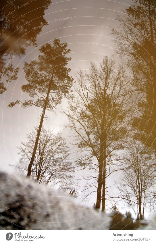 Bäume Umwelt Natur Landschaft Pflanze Wasser Himmel Wolken Sommer Wetter schlechtes Wetter Regen Baum Wald Holz stehen hoch nass braun Pfütze