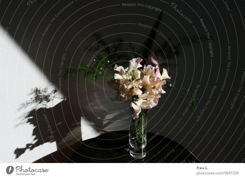 Wie im Rampenlicht stehe ich hier in meiner Glasvase, freute sich der kleine Wickenstrauß – jetzt fehlt nur noch der Applaus. Blumen Blüte Vase Tisch