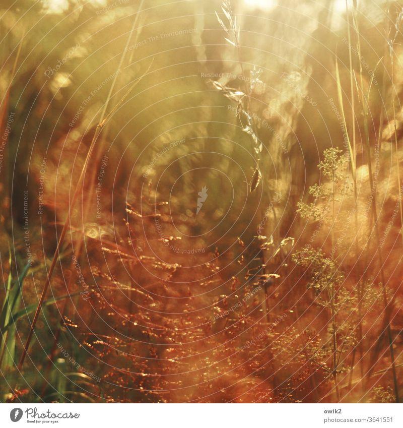 Das Gras wachsen hören Wiese Halme Nahaufnahme Detail Makroaufnahme Natur Detailaufnahme Pflanze Außenaufnahme Umwelt durcheinander flimmern funkeln glänzen