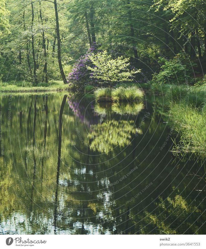 Selbstvergessen Kromlau Park Wald Landkreis Görlitz Ostdeutschland Niederschlesien Sachsen Außenaufnahme Farbfoto Menschenleer Landschaft Waldsee