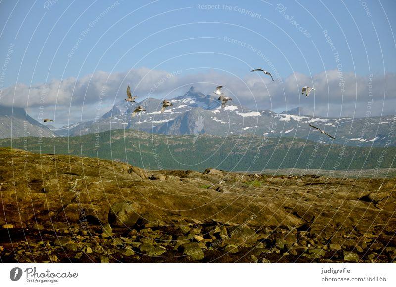 Norwegen Umwelt Natur Landschaft Pflanze Tier Wolken Klima Felsen Berge u. Gebirge Schneebedeckte Gipfel Küste Fjord Wildtier Vogel Möwe Tiergruppe Schwarm