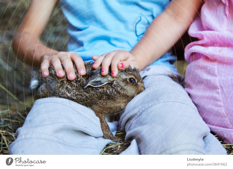 Kinderhände, die ein Hasenbaby vor dem Hintergrund eines Heuhaufens halten und streicheln Medizin Katze Gesundheit Veterinär Frau Mädchen Pflege Säugetier