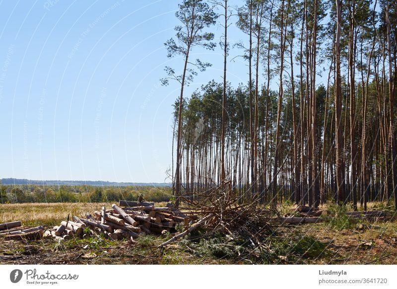 Brennholzstapel im Sägewerk. Brennholzstapel. Brennholz-Hintergrund. Arme Hölzer sind im Hintergrund zu sehen. Ökologische und ökologische Probleme Business