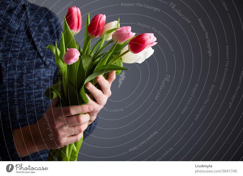 Mann hält Tulpenstrauß. Bunte Tulpen in Männerhänden. Licht im Studio. Weicher Fokus. Frühlingsblumen, rosa, weiß und Tulpen in den Händen. Konzept Ostern, Geburtstag, Mutter, Frauen, Hochzeitstag.