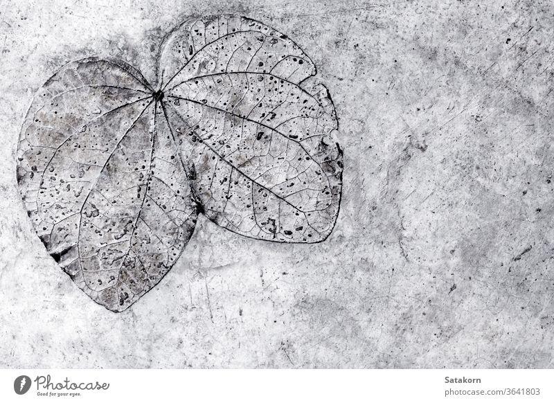 Blatttextur im Betonboden Textur Muster Stock Natur grau Hintergrund alt natürlich Oberfläche Abdruck abstrakt Architektur Detailaufnahme schön Design Schönheit