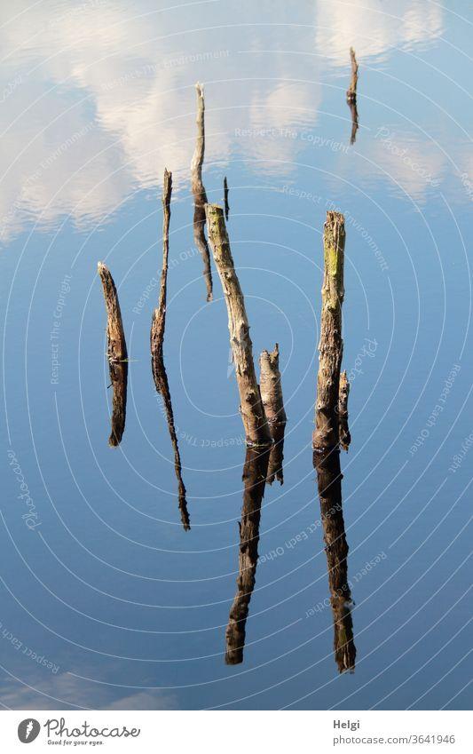 bizarre Gebilde - Reste von abgestorbenen Bäumen ragen aus einem Moorsee und spiegeln sich im blauen Himmel mit Wolken  | Symmetrie Äste Spiegelung Natur
