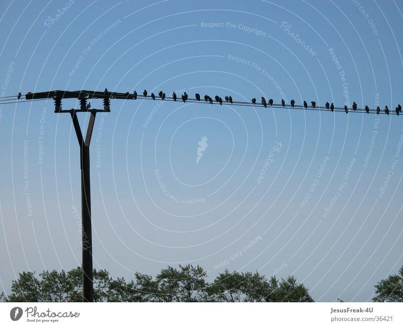 Lieblingspltatz Vogel mehrere viele Strommast Blauer Himmel Nachmittag