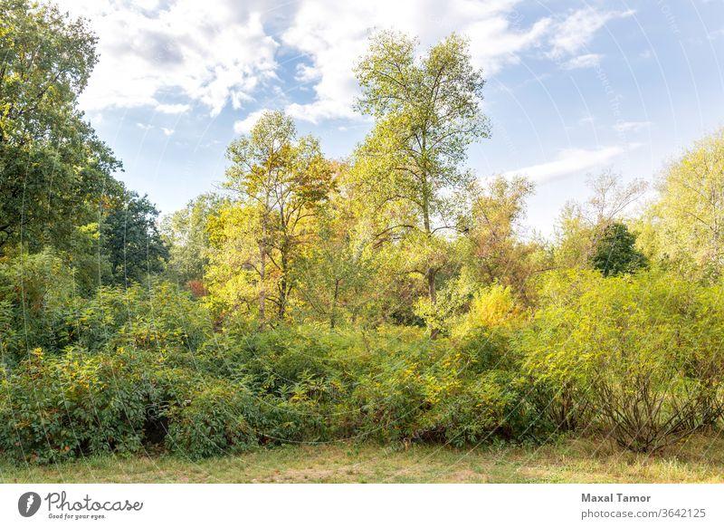 Verschiedene Bäume im Park Herbst Hintergrund Buchse Cloud Land Umwelt fallen Laubwerk Fußweg Wald grün Landschaft Blatt Licht Ahorn natürlich Natur Eiche