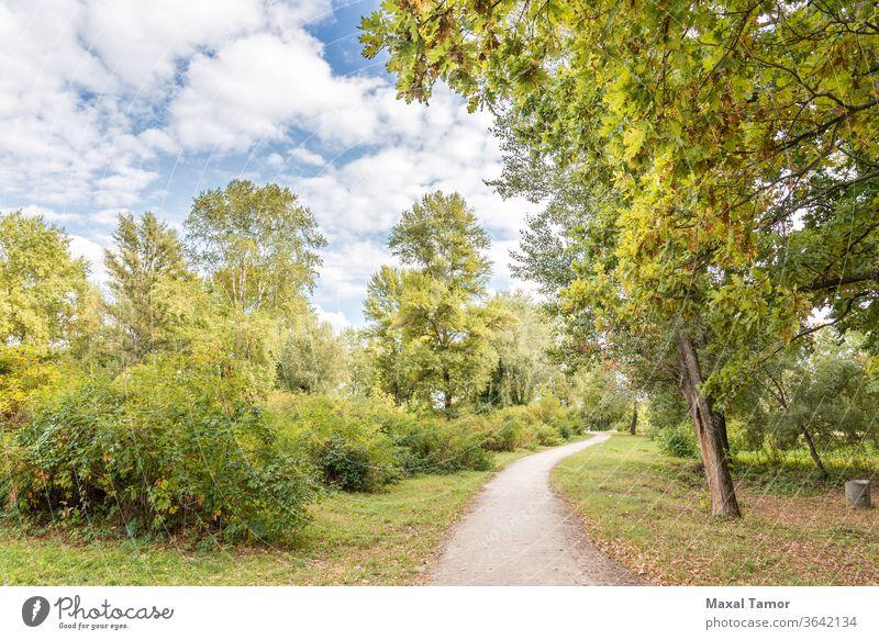 Ein Spaziergang im Park Herbst Hintergrund Buchse Cloud Land Umwelt fallen Laubwerk Fußweg Wald grün Landschaft Fahrspur Blatt Licht Ahorn natürlich Natur Eiche