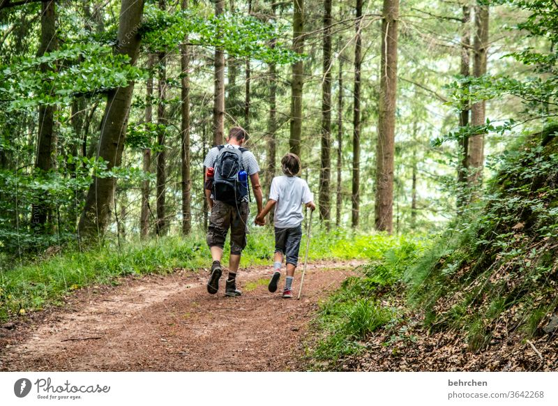 konform | im gleichschritt Hand in Hand Wald Ferien & Urlaub & Reisen Liebe Familie & Verwandtschaft Eltern Kind Mann Junge wandern Vater Sohn Sommer Natur