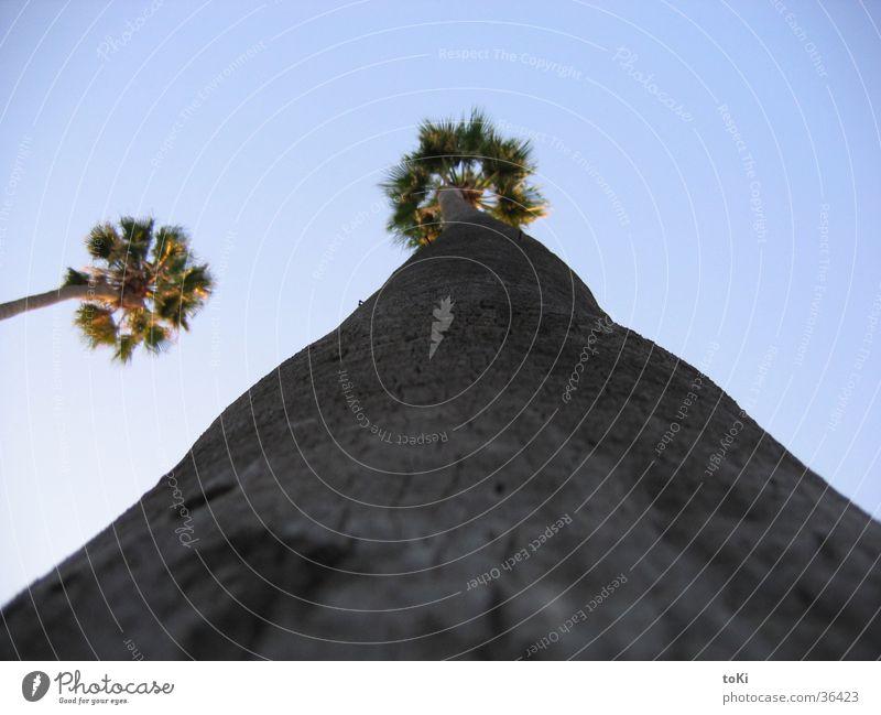 Palm Natur Himmel Baum blau Sommer Ferien & Urlaub & Reisen groß Perspektive Italien Palme Schönes Wetter Strommast Nachmittag beeindruckend Mallorca