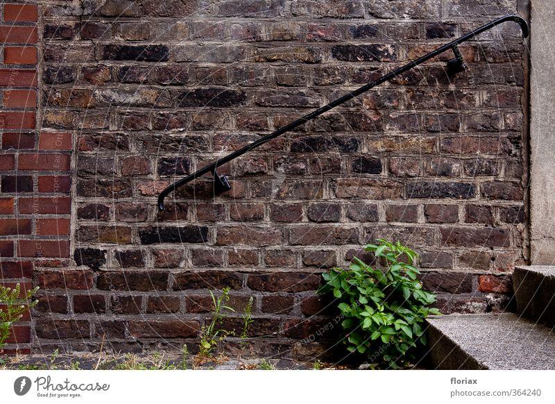 aufwärts an der kirchenmauer alt Stadt grün Pflanze ruhig Wand Mauer Gebäude grau Stein gehen braun Treppe Wachstum Beton ästhetisch
