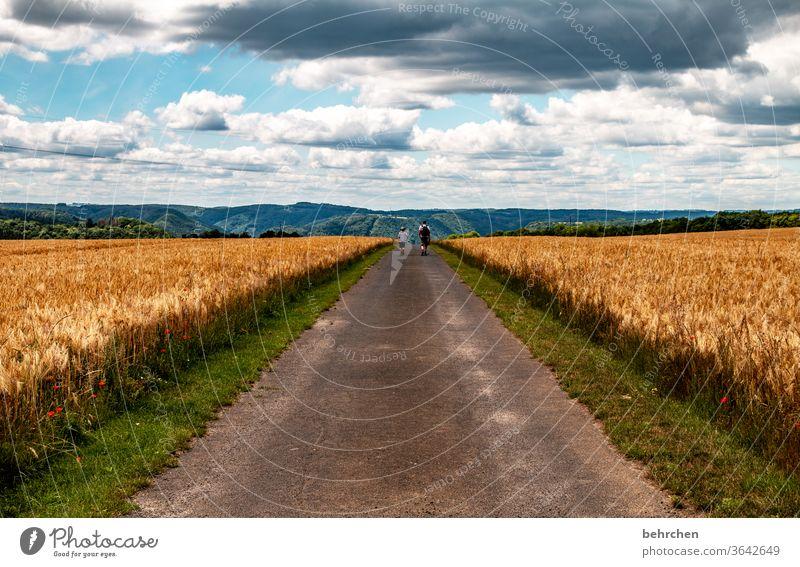 HAPPY BIRTHDAY PHOTOCASE   es war manchmal ein langer weg! Getreidefeld Wanderer Straße Wege & Pfade Zusammensein gemeinsam Berge u. Gebirge Umwelt