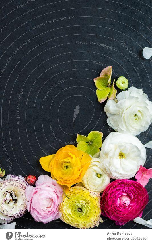 Hahnenfuß Hahnenfuß Blumen in verschiedenen Farben Ranunculus Blumenstrauß Ranunkel rosa Frühling Tag Haufen Mütter Text Blüte Natur Makro Geburtstag Blütezeit