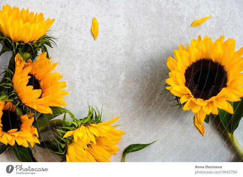Gelber Sonnenblumenstrauss auf grauem Hintergrund, Herbstkonzept Blumenstrauß August fallen Haufen Holz hölzern Tisch gelb Raum Natur weiß rustikal natürlich