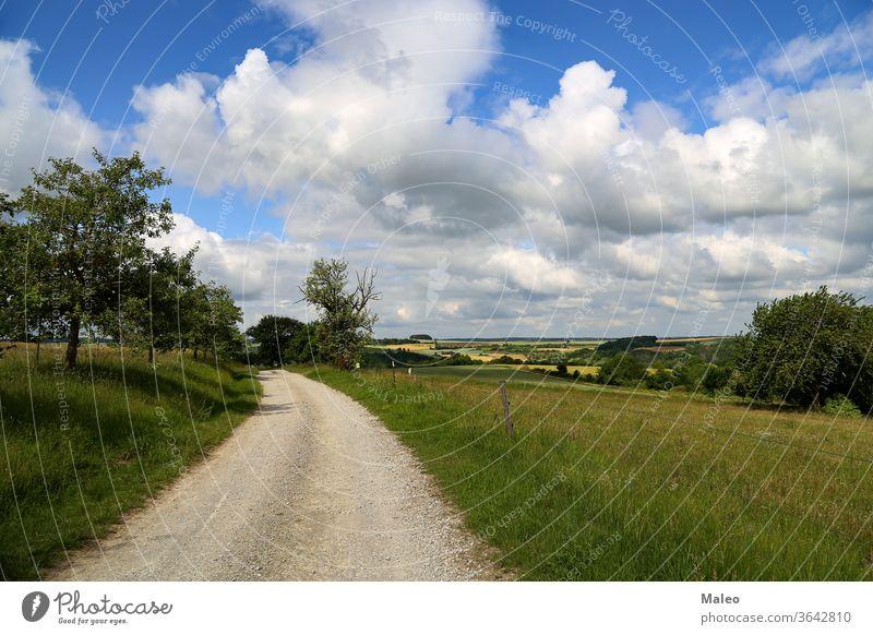 Sommerlandschaft mit Feldern, Wiesen und Feldweg Landschaft Natur Gras ländlich Himmel grün Sonne Baum Straße Schmutz Horizont Wetter Frühling blau Cloud