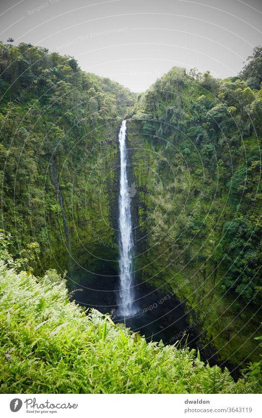 Hawaiianischer Wasserfall Natur schön landschaften Außenaufnahme Farbfoto Tag Menschenleer Landschaft Schönes Wetter Umwelt Ferien & Urlaub & Reisen grün