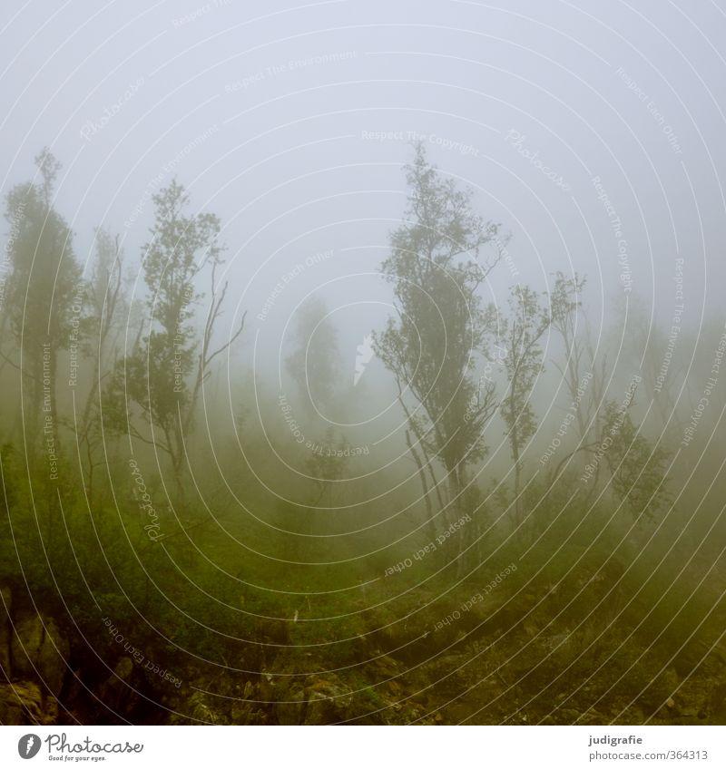 Norwegen Natur Baum Einsamkeit Landschaft Wald Umwelt dunkel kalt natürlich Stimmung Wetter wild Nebel Klima bedrohlich Norwegen