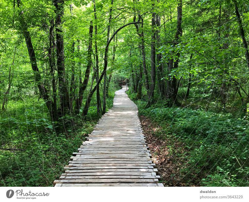 Waldweg - Waldsteg Holzbrücke Brücke Außenaufnahme Farbfoto Menschenleer Tag Natur Mast Schatten Landschaft Umwelt Wege & Pfade Ferien & Urlaub & Reisen Steg