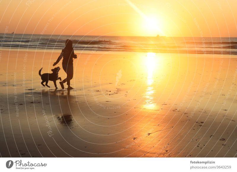 Frau mit Hund am Strand beim Sonnenuntergang Sonnenuntergang am Strand Sonnenuntergangsstimmung Reflexion & Spiegelung Meer Sonnenuntergangslicht