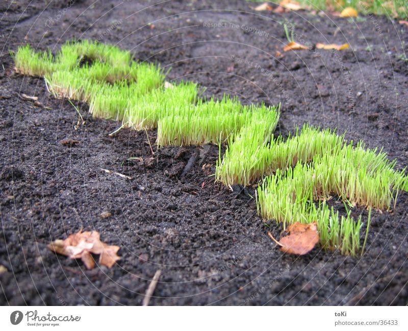 schräge sonne grün Sonne Gras Garten Park Buchstaben Rasen