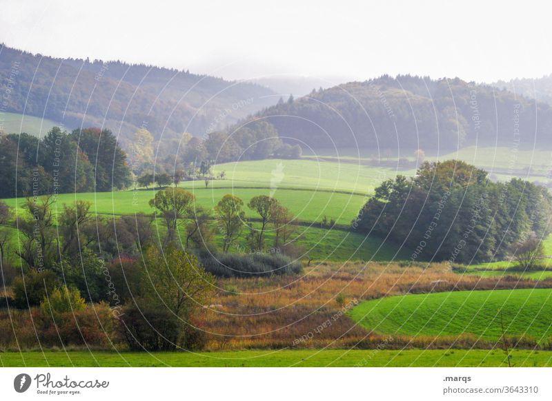 Allgäuer Hügel Natur Wiese Baum strauch Wald Nebel Landschaft Feld Umwelt