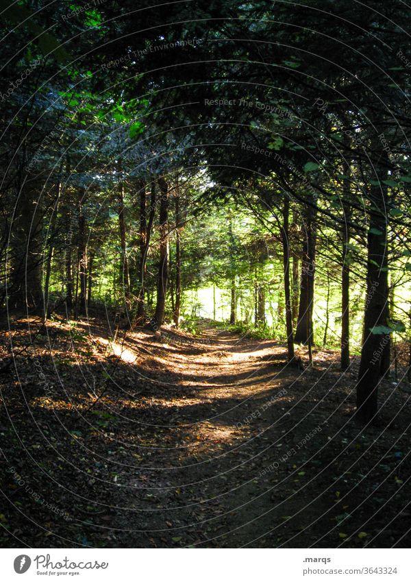 Wanderweg Natur Wald wandern Licht Schatten Lichterscheinung dunkel Wege & Pfade Umwelt Baum Erholung Fußweg Sonnenlicht Spaziergang Kontrast Naturschutzgebiet