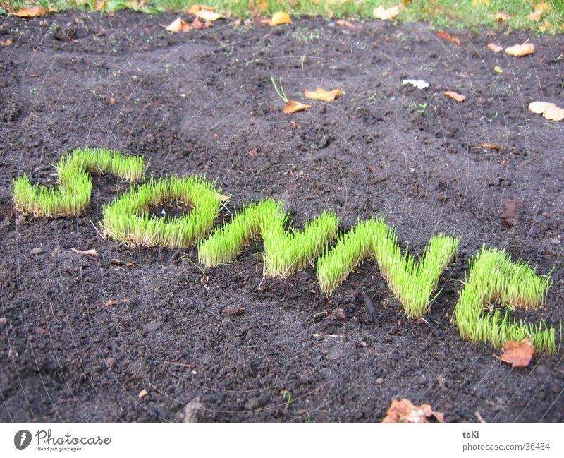 sonne grün Sonne Gras Garten Park Buchstaben Rasen