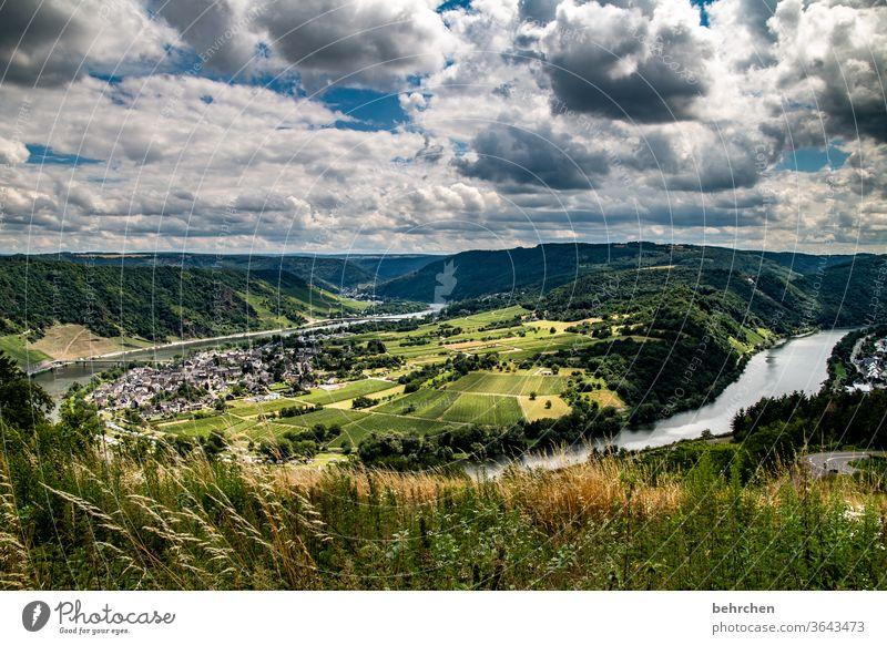 das leben ist viel zu kurz, um schlechten wein zu trinken! moselschleife Stadt Deutschland Hunsrück Moseltal Weinbau Ruhe Sonnenlicht Mosel (Weinbaugebiet)