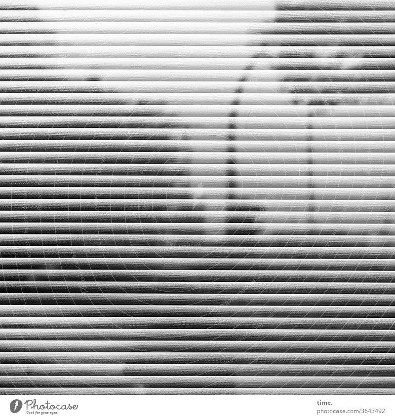 Spiegelstadt (2) baum urban jalousie spiegelung reflexion himmel skurril silhouette fassade perpektive fenster grau Laternenpfahl quer parallel waagerecht