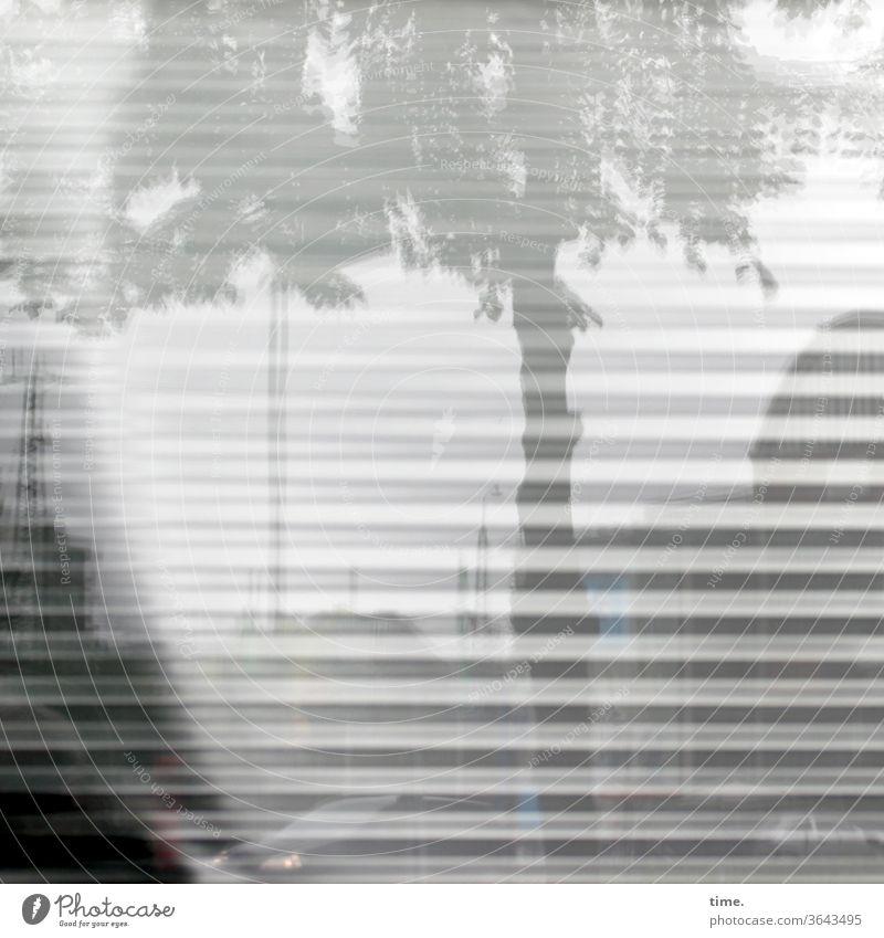 Spiegelstadt (1) baum urban jalousie spiegelung reflexion zweig himmel skurril silhouette natur fassade perpektive fenster grau Laternenpfahl quer parallel