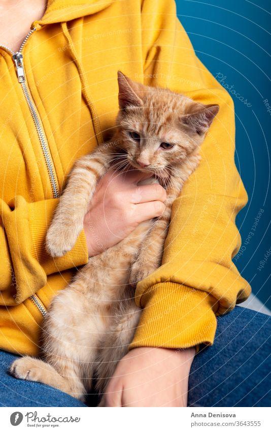 Süßes Ingwer-Kätzchen sitzt auf Händen Katzenbaby niedlich sich[Akk] entspannen Hand Besitzer Frau Beteiligung Haustier Baby manx schwanzlos kein Schwanz