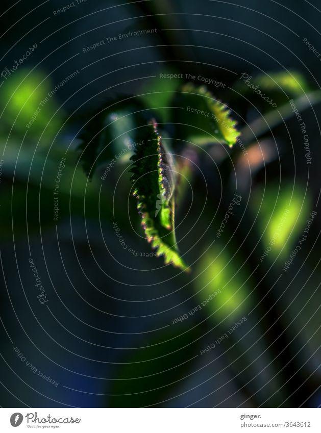Lensbaby Makro/Low Key: Mystisches Grün - Feeling like an alien Grünpflanze grün Schwache Tiefenschärfe Kontrast Schatten Licht Tag Hintergrund neutral
