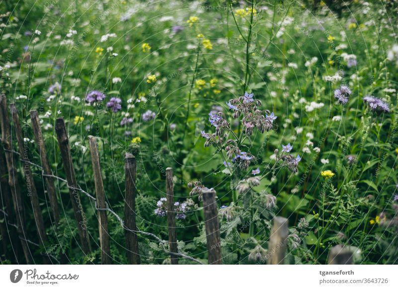 Blumenwiese Blühwiese staketenzaun Sommer grün Wiese Blühend Farbfoto Pflanze Tag Menschenleer Garten Nahaufnahme Außenaufnahme Natur Vielfalt bunt