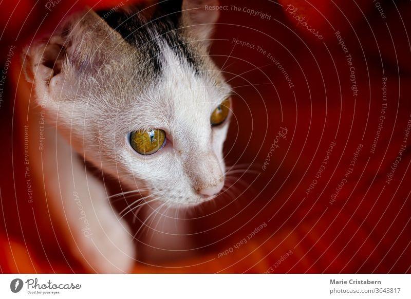 Neu gerettete streunende Katze, die sich unter einer orangefarbenen Matratze versteckt, zeigt Konzept der Freundlichkeit und fördert das Wohlergehen der Tiere