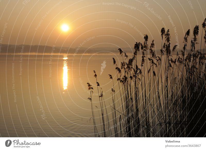 Morgen am Bodensee reichenau bodensee baden-württemberg Sonnenaufgang morgen morgenhimmel ufer küste schilf gras gräser schilfgras röhricht sonne morgensonne