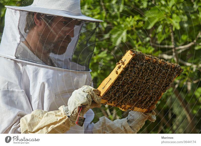 Imker, der in der Imkerei arbeitet. Ackerbau Bauernhof grün Landwirtschaft im Freien Sommer schützend Mann Honigbiene Bienenstock Schwarm Liebling Arbeiter