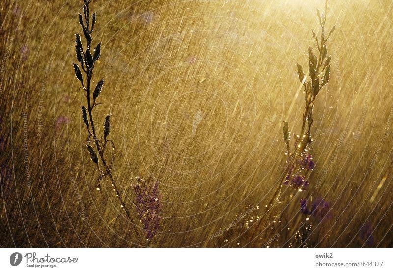 Frisch geduscht duschen Bewässerung funkeln leuchten Außenaufnahme Schönes Wetter Sonnenuntergang Textfreiraum oben Tag Textfreiraum links Textfreiraum unten