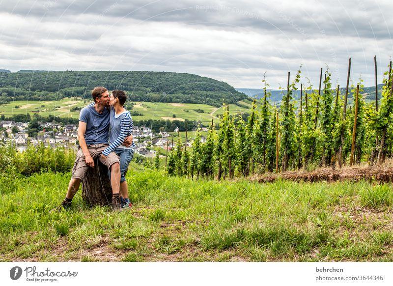 12!!! jahre Hunsrück Moseltal Weinbau Rheinland-Pfalz Flussufer Mosel (Weinbaugebiet) Sonnenlicht Ruhe Idylle Weinstock Weinrebe Weintrauben Schönes Wetter