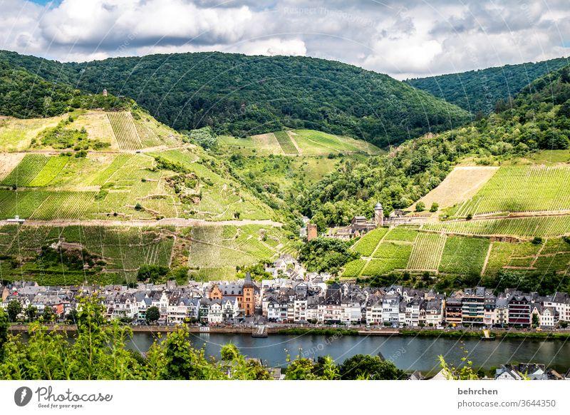stadt land fluss Hunsrück Moseltal Sonnenlicht Mosel (Weinbaugebiet) Flussufer Rheinland-Pfalz Ruhe Idylle Weinstock Weinrebe Weintrauben Weinberg Abenteuer