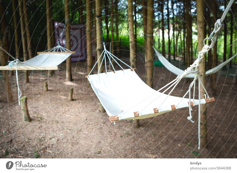 Hängematten an Bäumen in einem kleinen Wäldchen chillig viele Erholung Natur Sommer Entspannung Schwache Tiefenschärfe ruhen Ruhe Tag Tageslicht Wald Urlaub